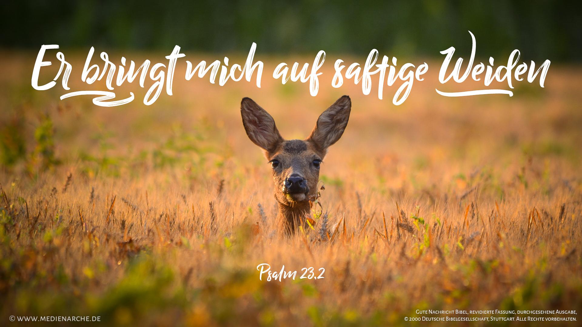 psalm-23-2_16_9_hd1080.jpg